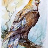 □  Скален орел