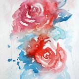 ■ Рози